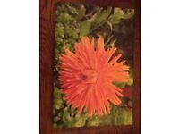 Orange Pom Pom Dahlia Canvas
