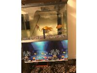 FISH TANK WITH STAND FILTER DECORATES FRESH WATER FISH TANK WITH 6 FISH