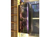 160L Fish Tank Aquarium, Full Setup Including Filters, Pumps, Plants, Heaters etc