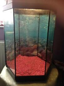Lovely hexagonal fishtank