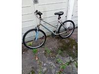 Lady bicycle Apollo XC 26