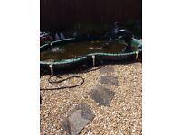 Atlantis Nevada huge bond 800 gallons fantastic size for all fish is