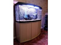 Fluval Vicenza Bow front fish tank 4ft