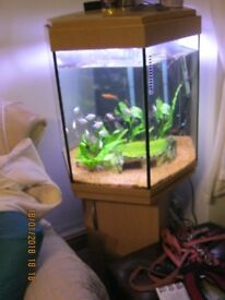 fully functional fish aquarium with fish & all accessarys. Will accept £50