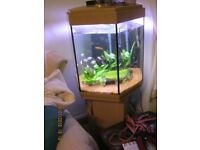 fully functional fish aquarium with fish & all accessarys.