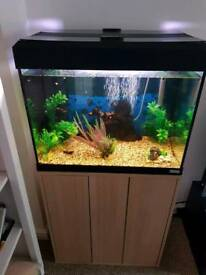 Fish Tank with all accessories & Fish