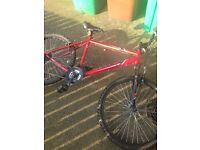 Apollo mountain bike for sale
