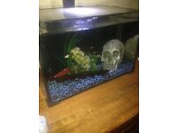 Clear line fish tank plus tropical fish and accessories