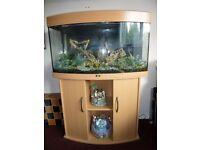 Juwel Vision 180 bow fronted aquarium on a Beech Cabinet & a'Nobby' Galleon ship wreck