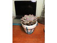 Stylish Pot & Plant