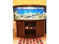 Juwel vision 260 vivarium snakes fish tank aquarium (delivery )