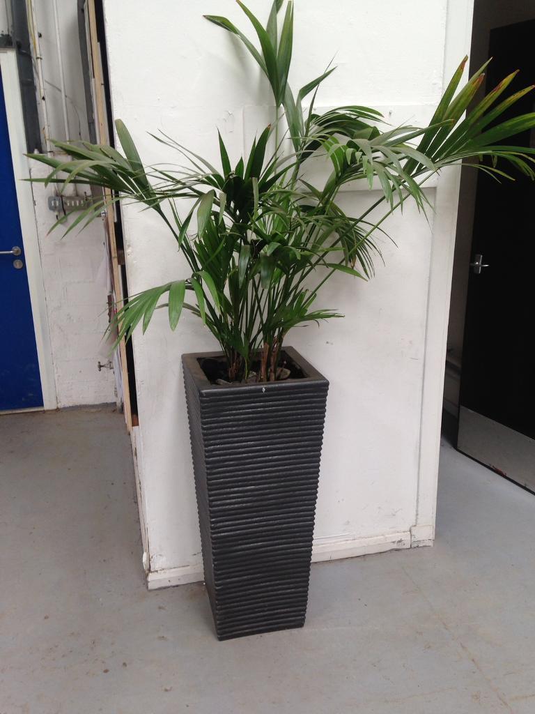 Indoor/outdoor planters