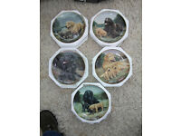 5 Franklin Mint collectors wall plates (Dogs at play)