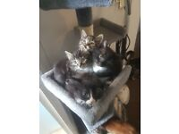 4 beaitiful kittens looking for their forever homes