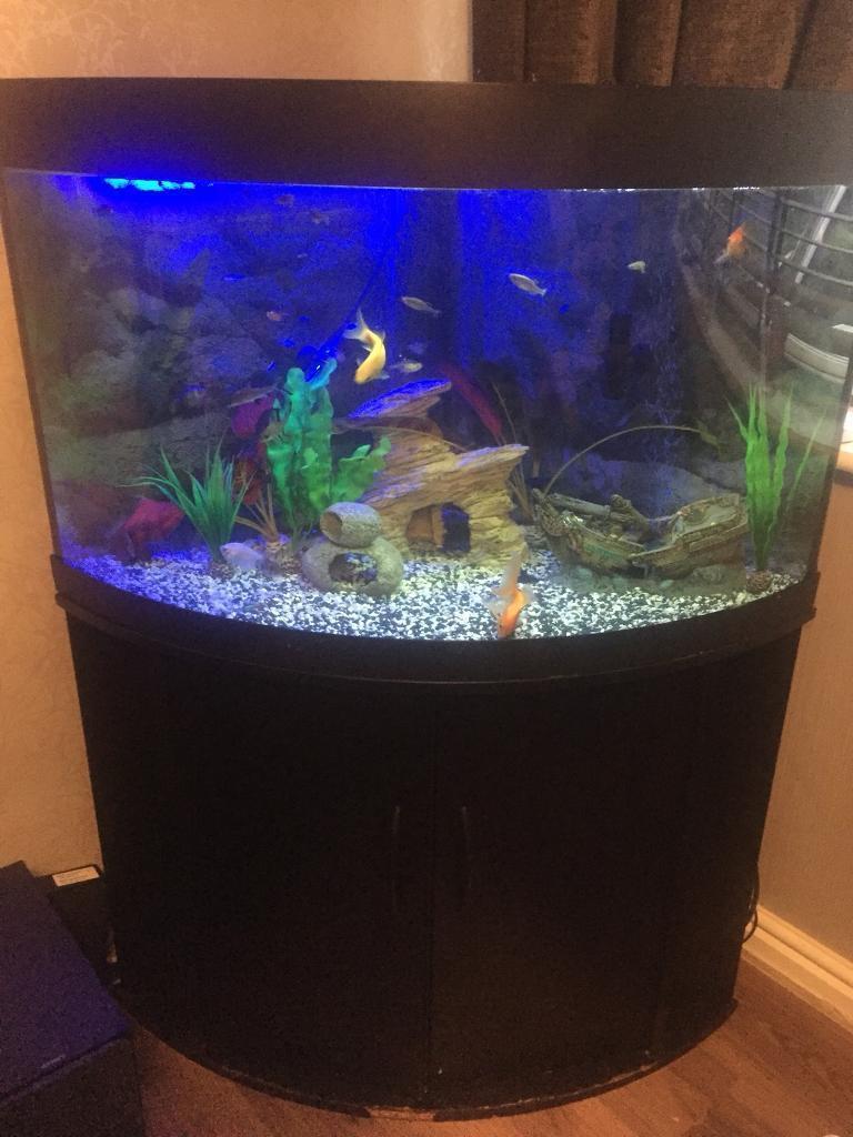 Corner tropical fish tank
