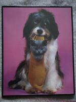 Cadre chien et chat sur fond rose foncé