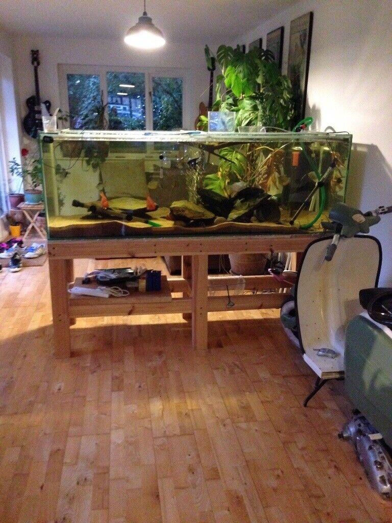 Large Aquarium, Fish Tank, 6ft x 2ft x2ft includes timber ...
