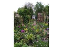 RHS qualified garden/planting designer