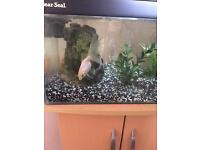 Fish tank with stand plus loads of accessories