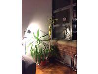 2 Plants + Pots