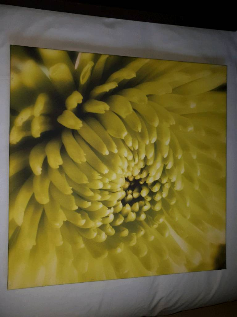 Canvas pictures | in Stanley, County Durham | Gumtree