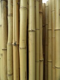 Bamboo screening for Patio/garden