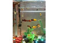 Fifty ltr fish tank with more than 40 fishes