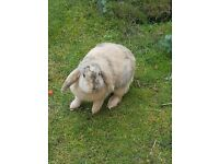 Free Rabbit and Hutch Only £30.00