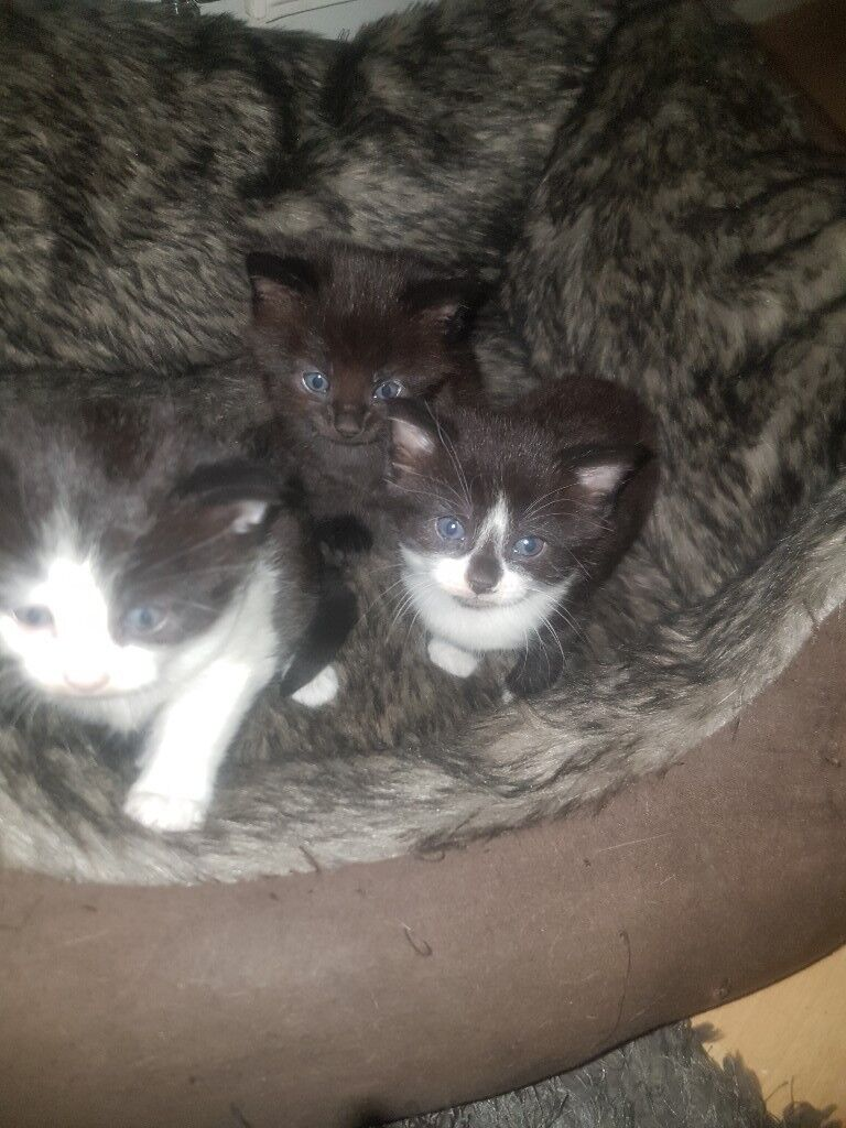 3 cute kittens for sale in South East London London
