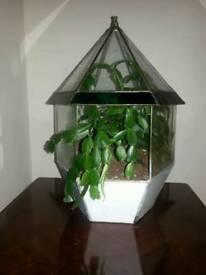 Antique glass plant terrarium