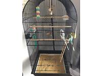 Two male budgies plus large cage and stand plus accessories