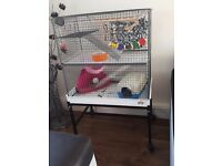 2 male rats, (6 months old) cage, stand and accessories