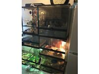 Exo Terra Vivariums and accessories for sale