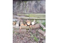 Fire wood collection only need gone asap
