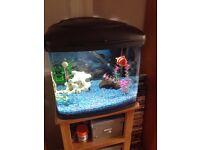 Aquarium for sale including 5 tetra fish