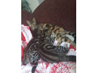 2 lovely kittens ready to go