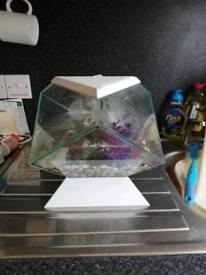 Ciano dimond fish tank in white