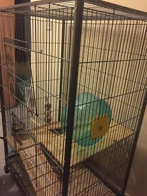 Large cage for Chinchillas/Rats/Degus need to be gone ASAP