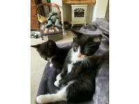 beautiful kittens only 2 left