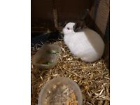 Rabbit plus cage for sale very friendly with kids