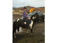 Great fun pony 17yr young