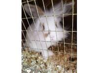 Bunny 13 weeks old