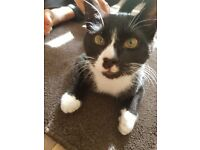 4 months black and white kitten