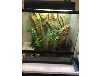 2 crested geckos with full setup (exo terra 60x45x60, all accessories)