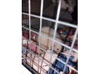 Charlie is about 5 months old she's so nice natured but i dont have the time.cage uncluded
