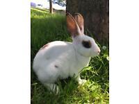 Mixed breed bunnies