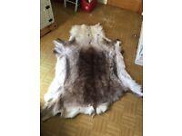 Reindeer skin rug 100% genuine