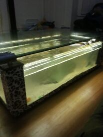 5ft coffee table fish