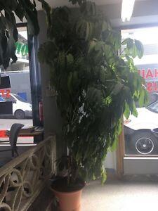 Beautiful Tall Plants Kings Cross Inner Sydney Preview