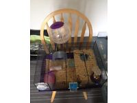 Small white hamster with cage and accesssories